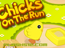 Chicken in the run