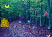 Communal Forest Escape