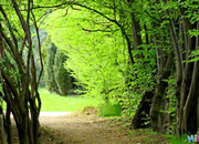 Easy Escape - Greeny Forest