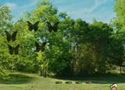 Farm Fox Forest Rescue
