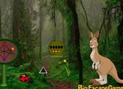 Kangaroo Land Escape