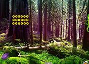 Anole Lizard Forest Escape