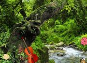 Great Rainforest Escape