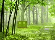 Green Autumn Forest Escape