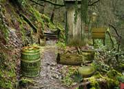 Trekking Forest Escape