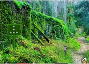 Giant Centipedes Forest Escape