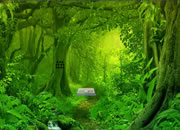 Green Forest Dove Escape