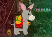 Pygmy Donkey Rescue