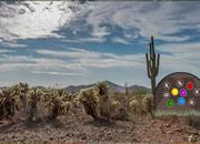 Daydreaming Desert Forest Escape