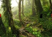 Mountain Forest Treasure Escape