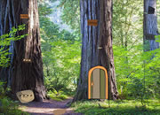 Old Beech Tree Escape