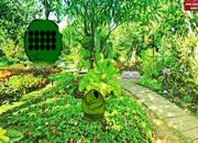 Lush Tropical Forest Escape