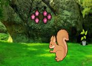 Missing Squirrel Love Rescue