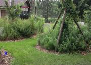 Little Garden House Escape