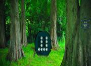 Enchanting Fantasy Forest Escape