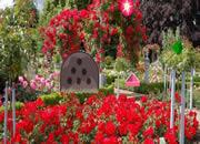 Blossom Rose Garden Escape