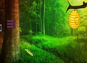 Enchanting Forest Trees Escape
